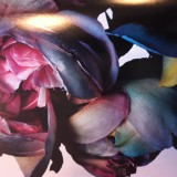 ShockBlast_Rose_2003_by_nick_knight