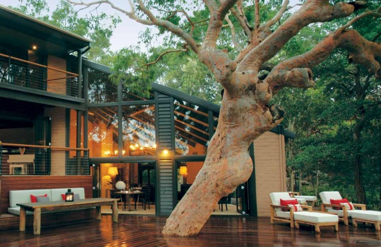 sydney-beachhouse-tree-deck(1)
