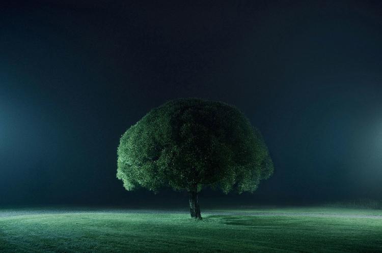 ShockBlast-Mikko_Lagerstedt-tree_of_life_II