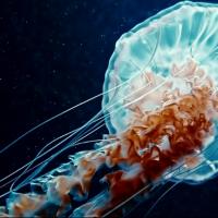 [Video] Endless Gravity - ShockBlast