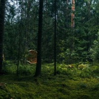 Giant timber megaphones to amplify sounds of Nature - ShockBlast