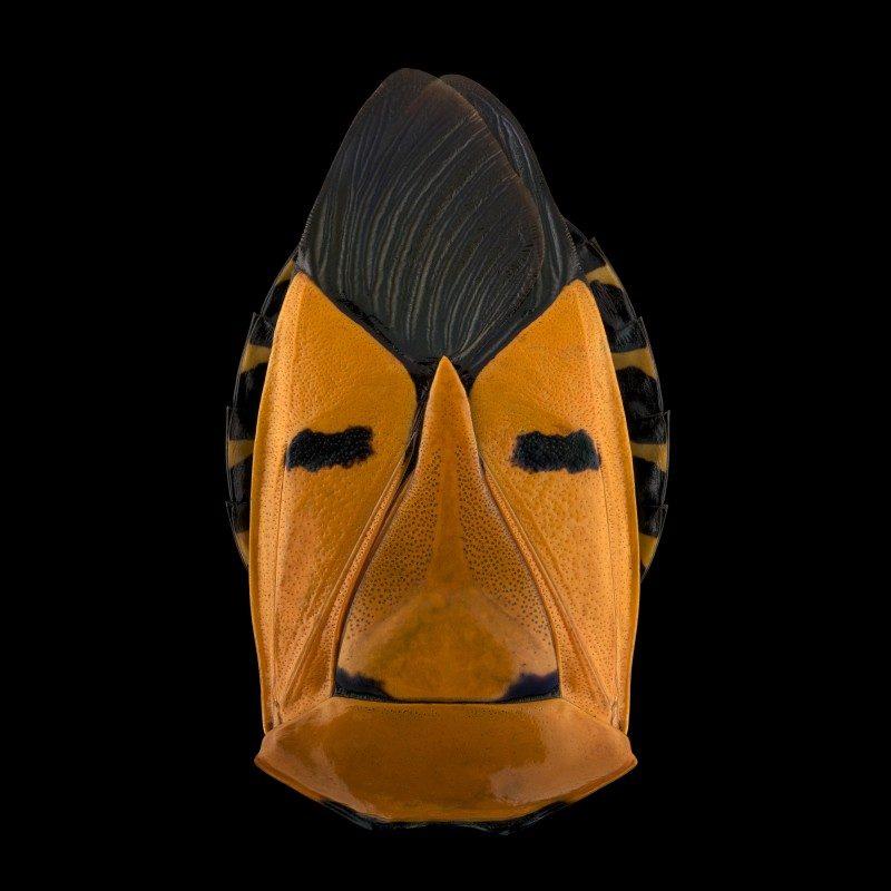 mask-totem-by-pascal-goet-ShockBlast-10