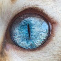 Cat Eyes by Andrew Marttila - ShockBlast