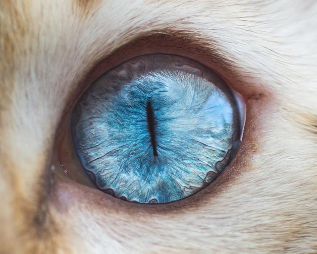 cat-eyes-andrew-marttila-shockblast-1