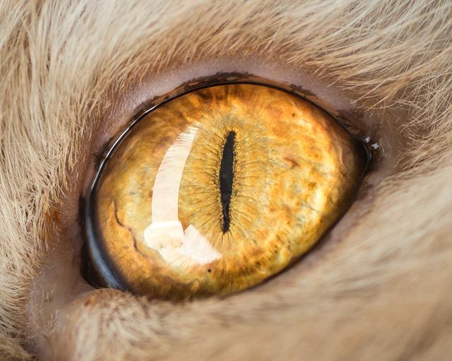 cat-eyes-andrew-marttila-shockblast-2
