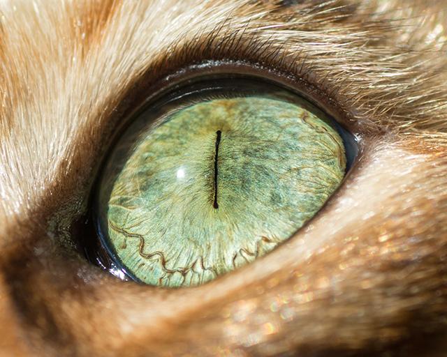 cat-eyes-andrew-marttila-shockblast-3