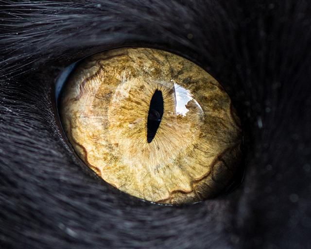 cat-eyes-andrew-marttila-shockblast-4