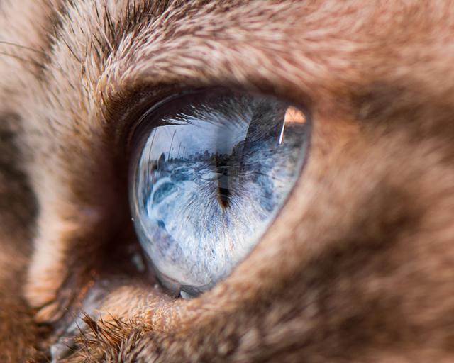 cat-eyes-andrew-marttila-shockblast-5