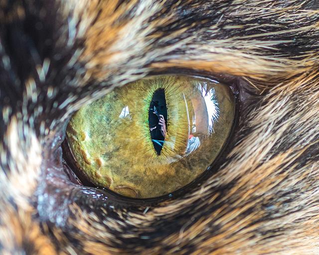cat-eyes-andrew-marttila-shockblast-6