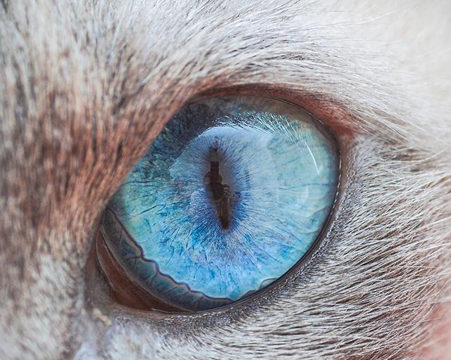 cat-eyes-andrew-marttila-shockblast-7