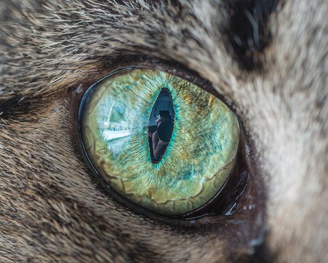 cat-eyes-andrew-marttila-shockblast-8