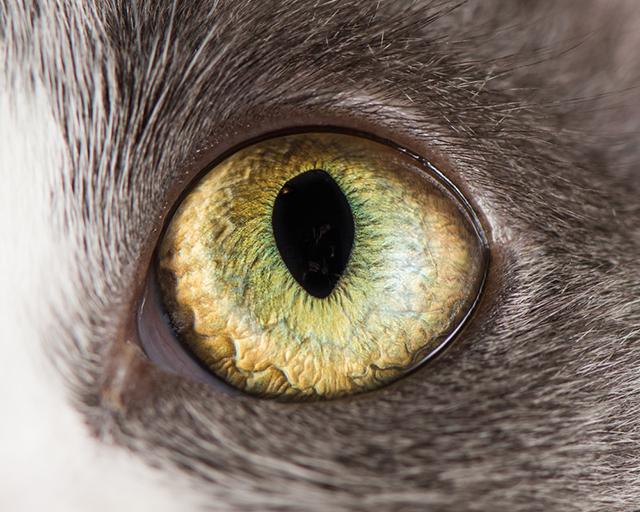 cat-eyes-andrew-marttila-shockblast-9